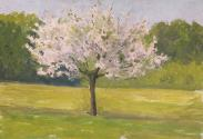 An Apple Tree in Blossom